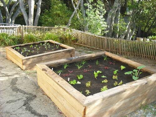 Coltivare un orto bio sul terrazzo di casa | Green Economy